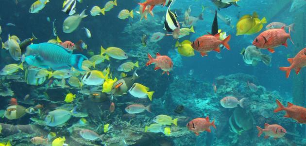صورة أنواع الأسماك وأسماؤها