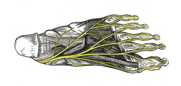 صورة التهاب أوتار القدم
