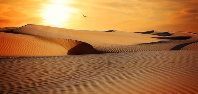 صورة جديد أبو طالب بن عبد المطلب