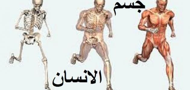 صورة جديد مما يتكون جسم الإنسان