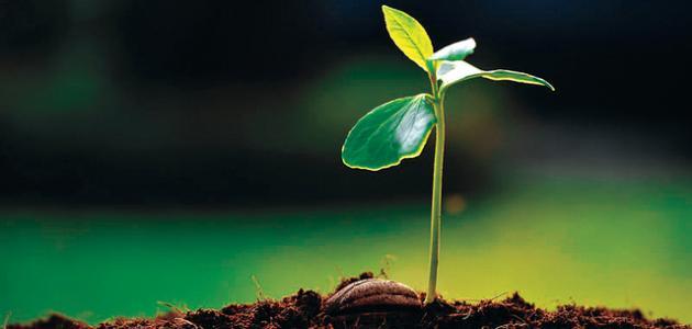 صورة جديد بحث عن النباتات