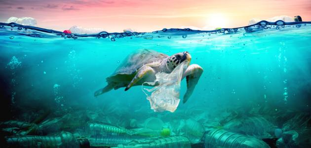 صورة جديد كيف نحافظ على البيئة من التلوث