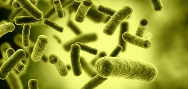 صورة جديد الفطريات والبكتيريا