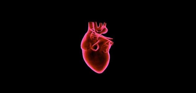صورة جديد ما هي أسباب تضخم القلب
