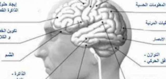 صورة جديد ضمور المخ وأسبابه