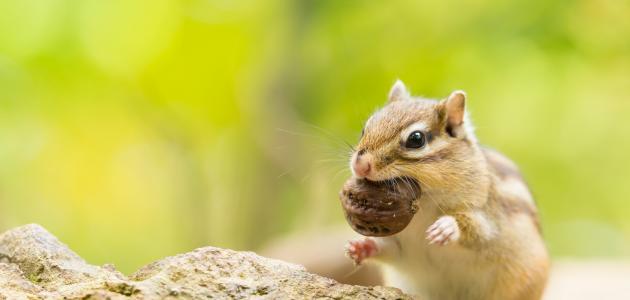 صورة جديد كيف نحمي الحيوانات البرية