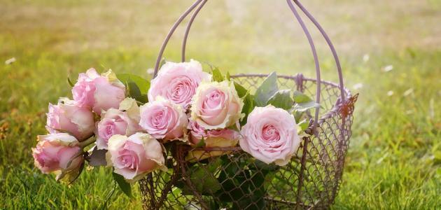 صورة جديد كلام عن الزهور