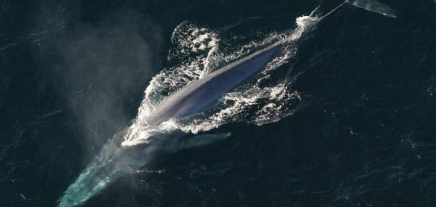 صورة جديد ما هي أنواع الحيتان