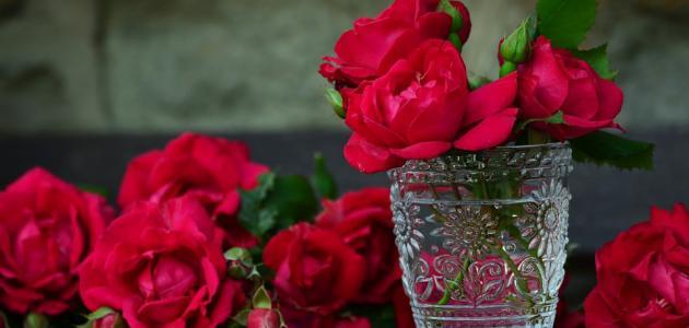 صورة جديد كلمات عن الورود الجميلة