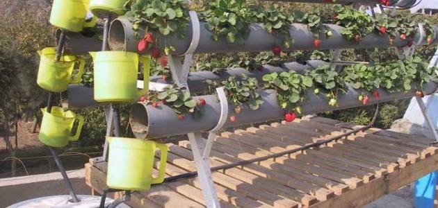 صورة جديد أنواع الزراعة