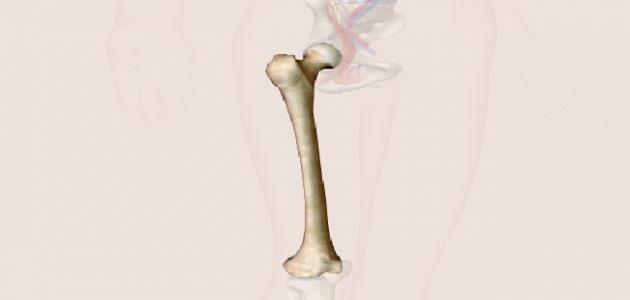 صورة جديد اسم عظام الفخذ