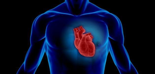 صورة جديد أين يقع القلب على اليمين أو اليسار