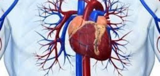 صورة جديد ما علاج مرض القلب