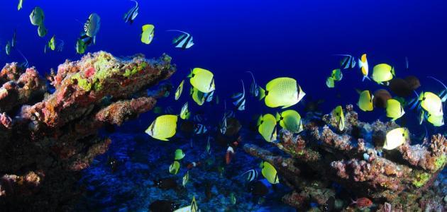 صورة جديد عجائب عالم البحار
