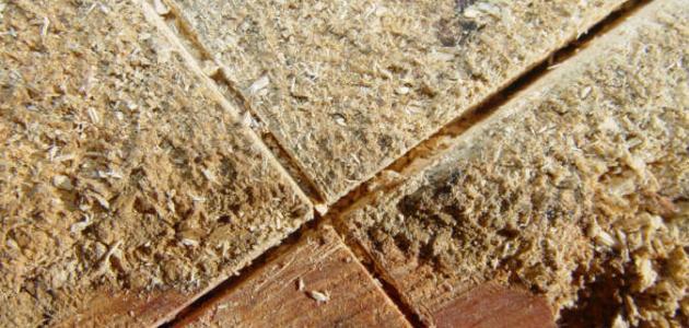 صورة جديد فوائد نشارة الخشب