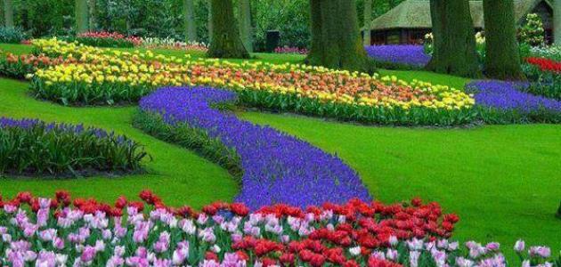 صورة جديد موضوع تعبير عن الربيع