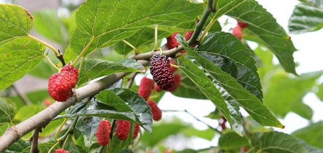 صورة جديد أسرع أشجار الفاكهة نمواً