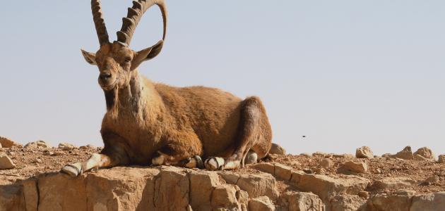 صورة جديد لماذا يجب حماية الحيوانات