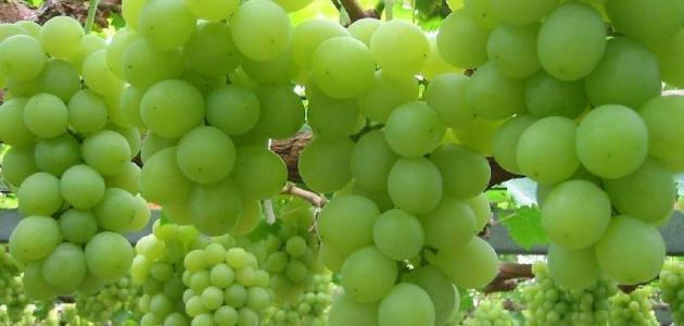 صورة جديد فوائد العنب الأخضر للبشرة