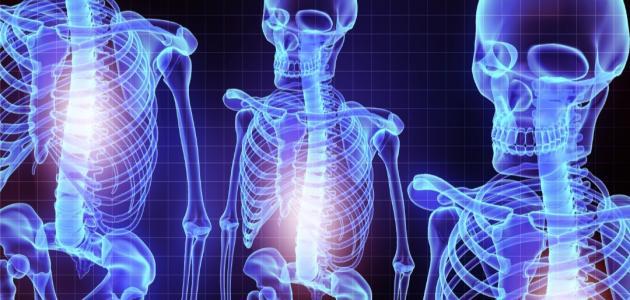 صورة جديد أجزاء الجهاز العظمي