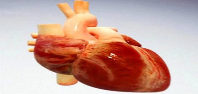 صورة جديد كيف ينتقل الدم خلال القلب