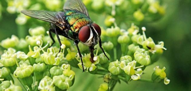 صورة جديد كيفية طرد الذباب من الحديقة