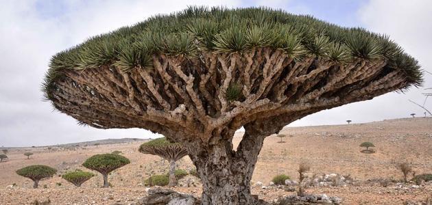 صورة جديد أهم جزر اليمن