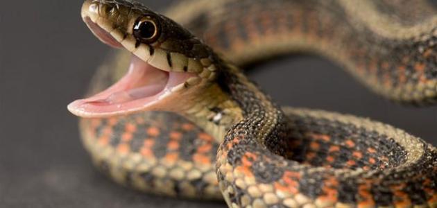 صورة جديد معلومات عن الثعابين