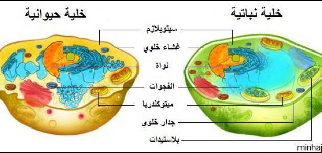 صورة جديد مكونات الخلية الحيوانية