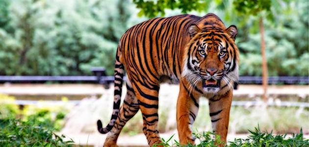 صورة جديد بحث عن تنوع الثدييات