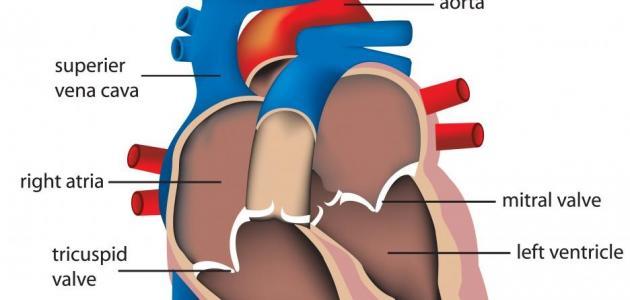 صورة جديد خفقان القلب للحامل وأسبابه
