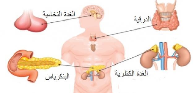 صورة جديد ما هي الغدد الصماء