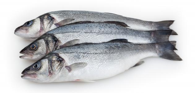 صورة جديد فوائد سمك القاروص