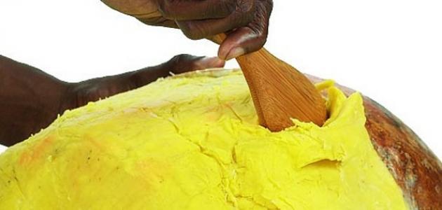 صورة جديد فوائد زبدة الشيا الإفريقية