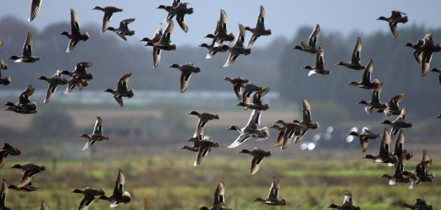 صورة جديد طرق صيد الطيور