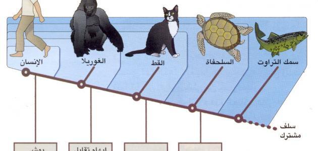 صورة جديد جهود العلماء في تصنيف الحيوانات