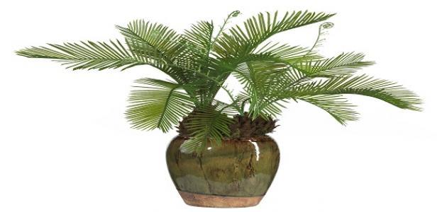 صورة جديد أسماء نباتات الظل