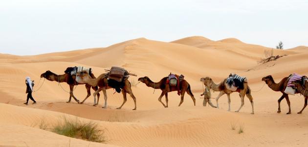 صورة جديد السياحة الصحراوية في تونس