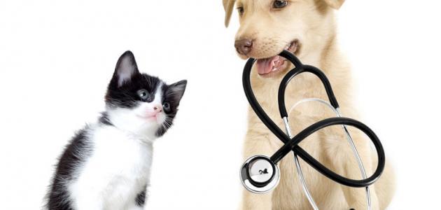 صورة جديد أمراض الكلاب وكيفية علاجها