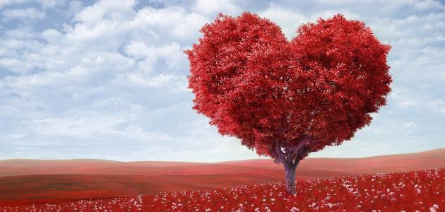صورة جديد كلمات عن الوفاء والحب