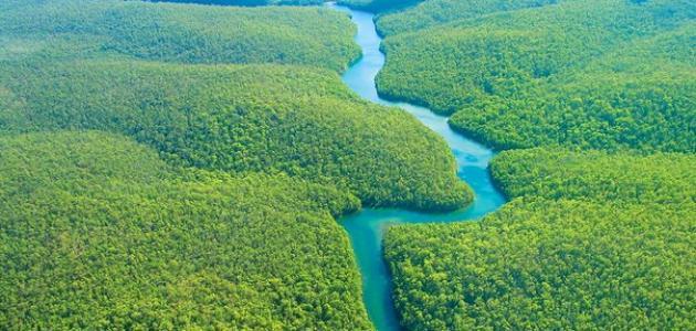 صورة جديد أين تقع غابات الأمازون