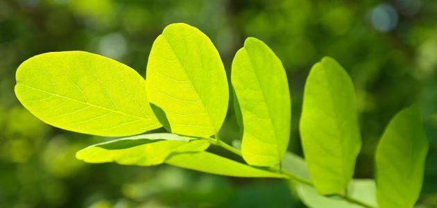 صورة جديد تأثير الضوء على النبات