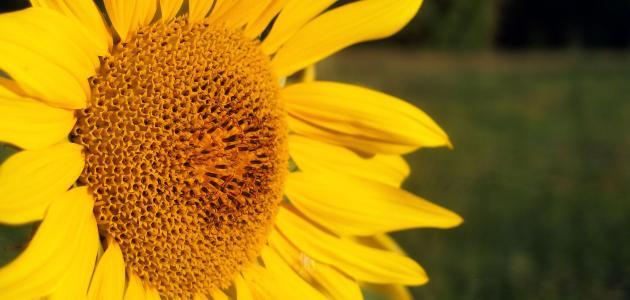 صورة جديد خصائص النباتات مغطاة البذور