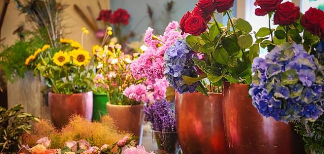 صورة جديد أنواع الأزهار وأسماؤها