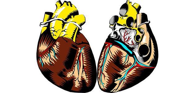صورة جديد أجزاء القلب