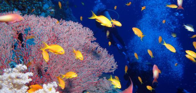 صورة جديد رحلة إلى قاع البحر