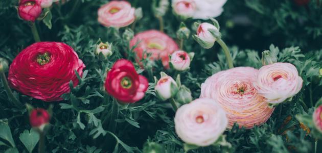 صورة جديد كلمات في جمال الورد