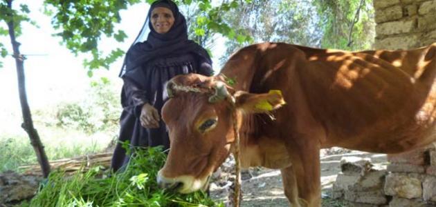 صورة جديد محافظات صعيد مصر