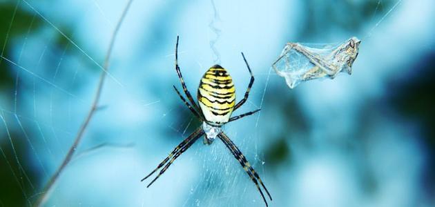 صورة جديد كيف يعيش العنكبوت