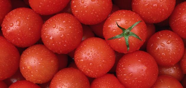 صورة جديد أنواع الطماطم